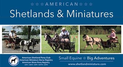 American Shetland